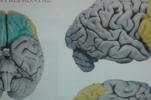cerebro-emociones