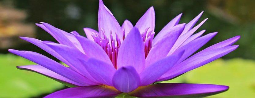 mindfulness-consciencia plena